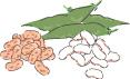食物繊維の多い食品